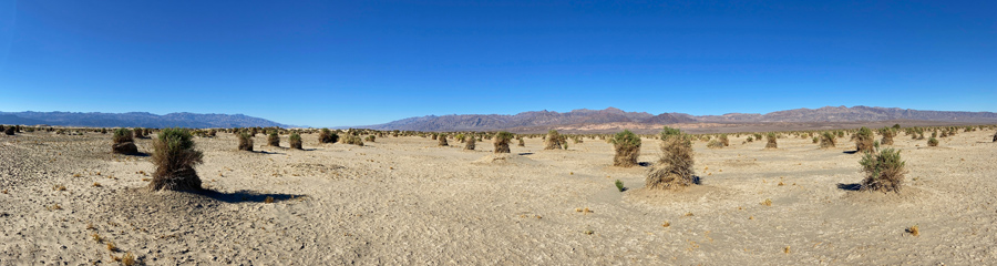 Devil's Corn Field at Death Valley NP in CA