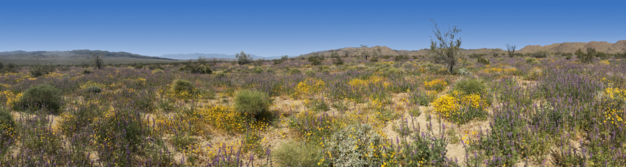 Cottonwood Spring at Joshua Tree NP in CA