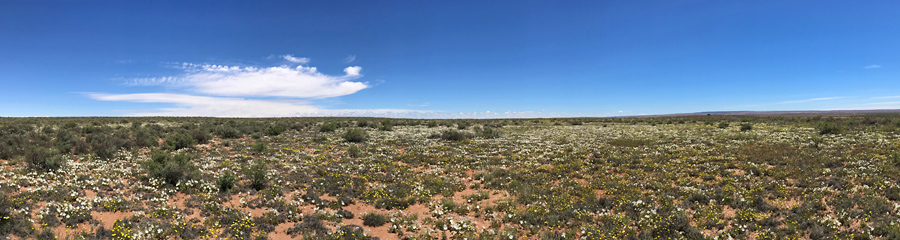 Landscape at Petrified Forest NP in AZ