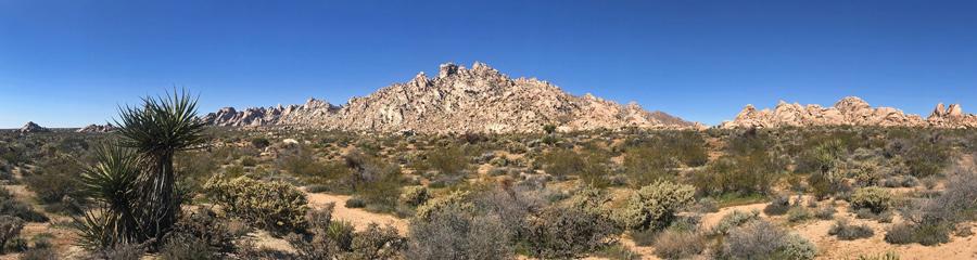 Mojave National Preserve in CA