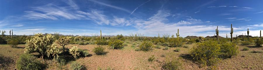 Organ Pipe Cactus NM in AZ